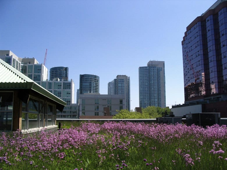 RETHINKING GREEN ROOFS: 9 points to consider before greening your roof