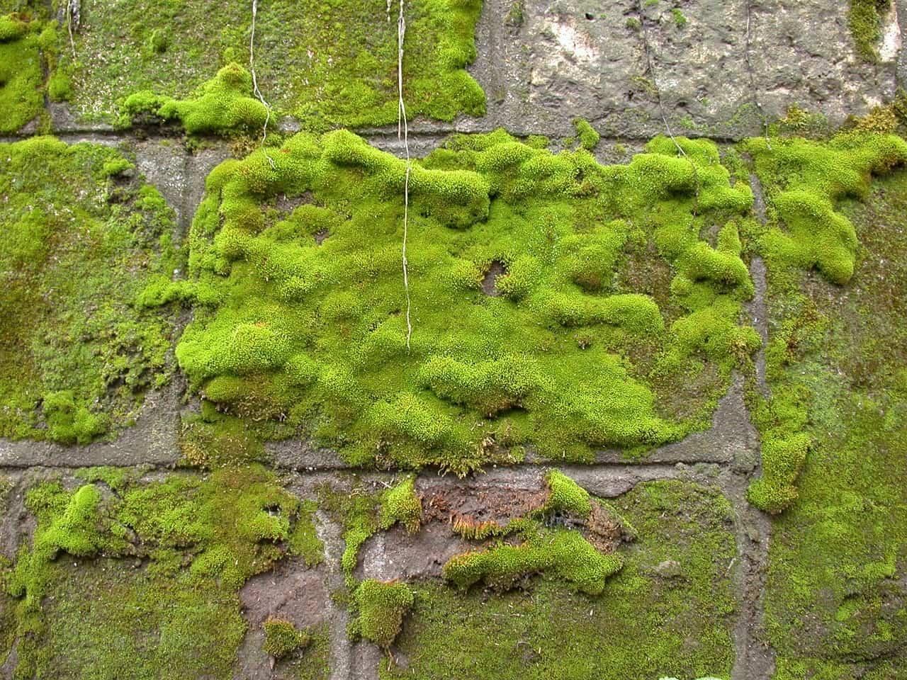 Can a Moss Culture Really Clean Urban Air?