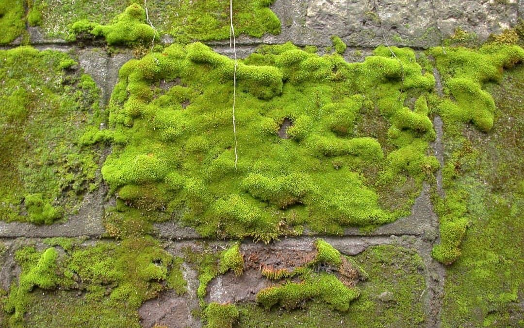 Can a Moss Culture Really Clean Urban Air?