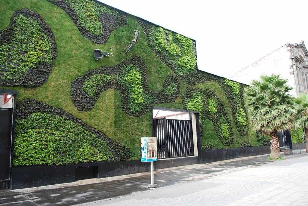 Green wall (plant growth) in Mexico City - The quest for energy efficient buildings