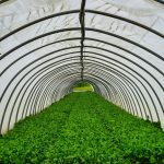 How to Build a Simple Greenhouse With Recycled Materials