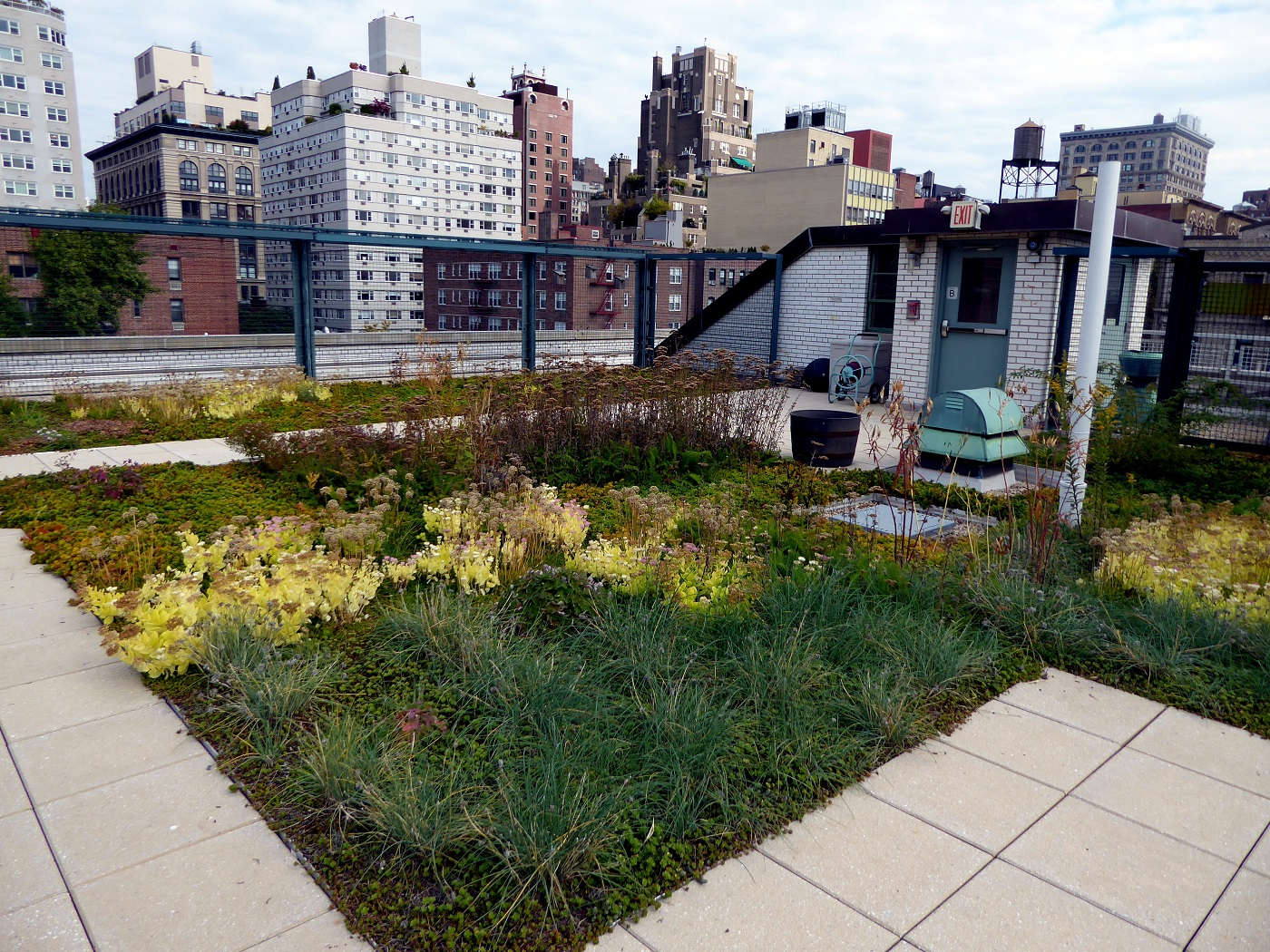Green roof on top of industrial building - A guide to green roofs