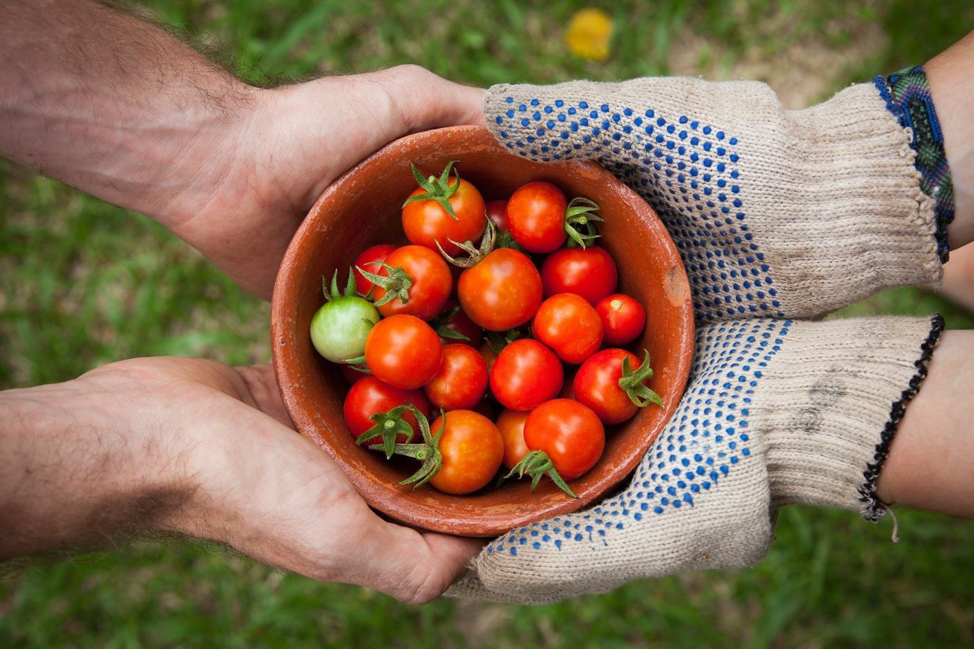 Two people holding bowl of tomatoes - A guide to green roofs